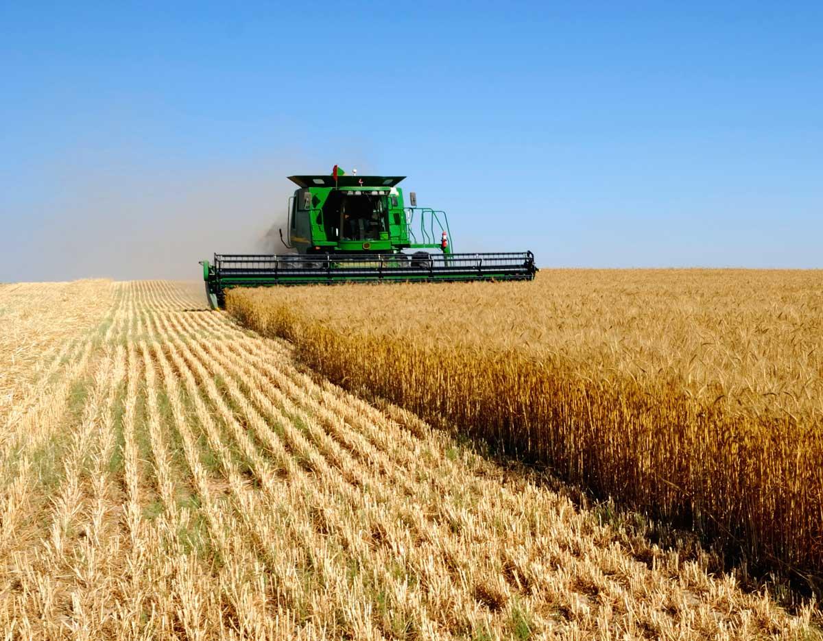 Николаевщина занимает 4 место среди регионов Украины по объему сельхоз производства