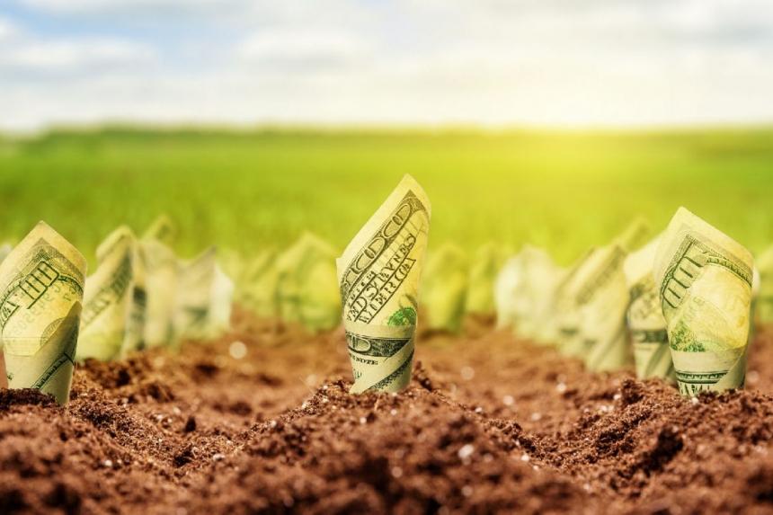 Самая дорогая земля – в 5 областях Украины: кто заработает более $4 тысяч за гектар