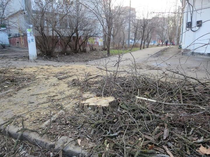 В Николаеве незаконно спилили три акации