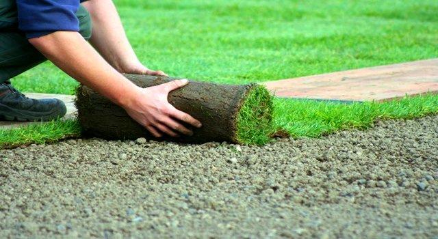 В Николаеве переплатили 2,8 миллиона за озеленение, проведенное только на бумаге