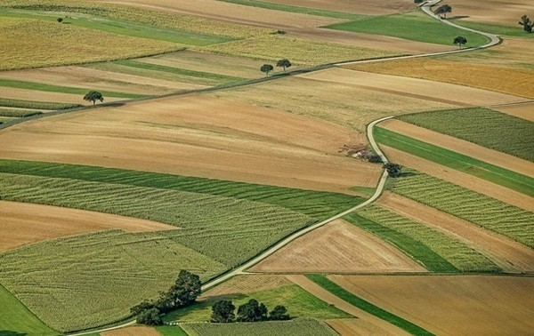 Из госсобственности незаконно вывели 700 тысяч га земель