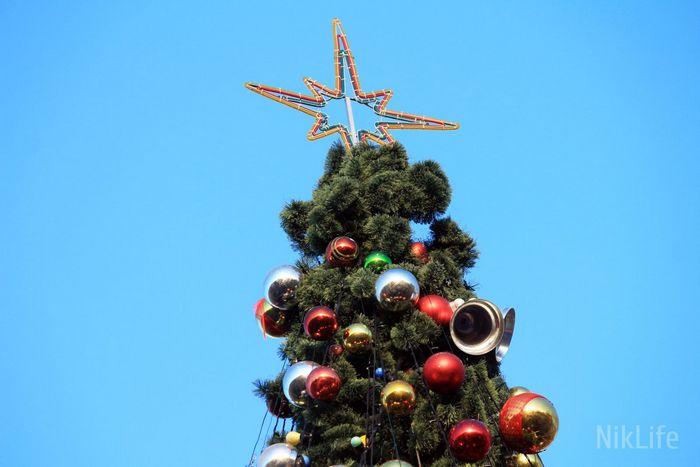 Николаевские новогодние ёлки радуют горожан своим великолепием