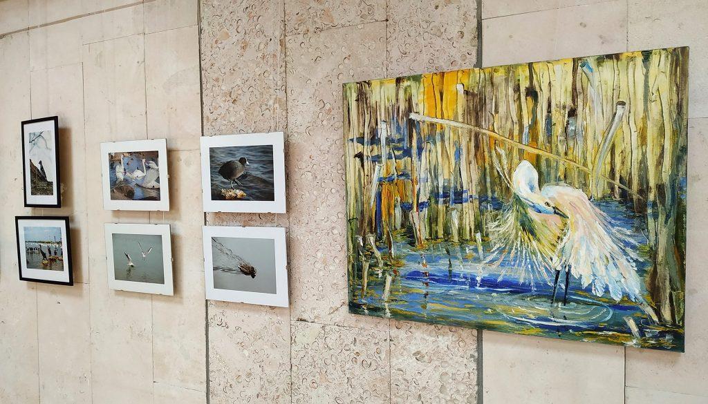 Миколаївців кличуть на відкриття арт-проєкту «Пташина елегія»