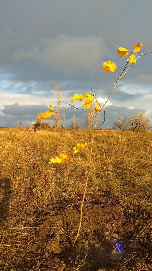 «Армия за экологию»: николаевские военные высадили более 40 деревьев (ФОТО)