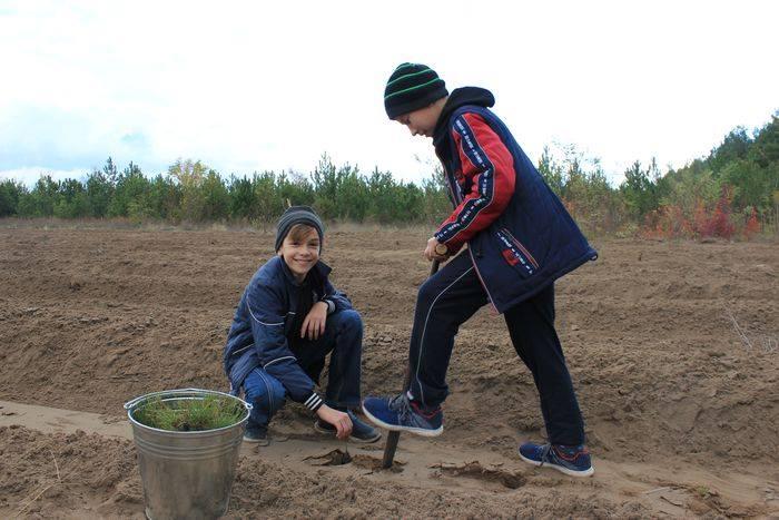 Восстановим вместе Новопетровский лес!