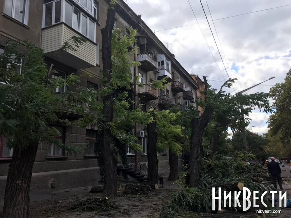 В центре Николаева «варварски» обрезали деревья