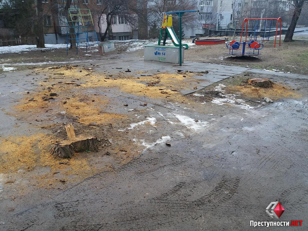 В Николаеве спилили три дерева во дворе многоэтажки: одни жильцы говорят, что они были сухими, а другие – что живыми