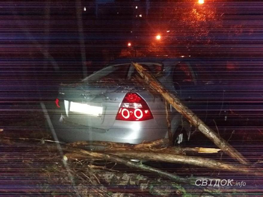 Жительница Николаева, на авто которой упало аварийное дерево, выиграла суд у местных чиновников
