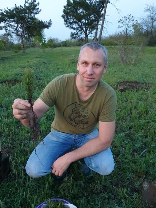 В Николаеве вдоль Херсонского шоссе появилось более 70 молодых сосен