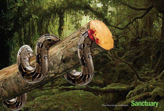 Вырубка лесов убивает жизнь: социальная реклама в защиту животных и природ