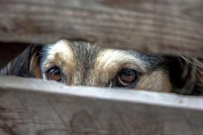 Временный руководитель ЦЗЖ заявил, что ему безразлично, какую программу по регулированию численности собак примет горсовет