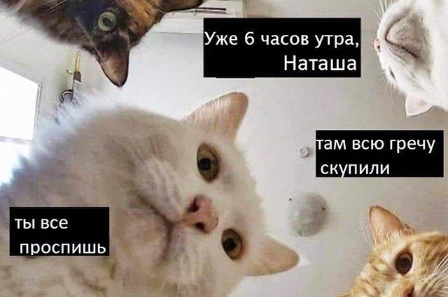 Самый популярный продукт — гречка и мемы про нее в соцсетях у николаевцев
