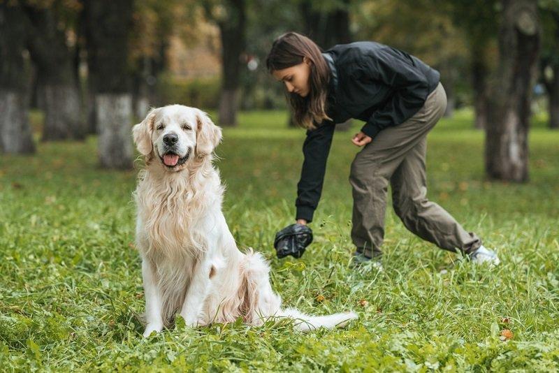 В Николаеве депутат горсовета просит мэра установить в парках урны с собакопакетами