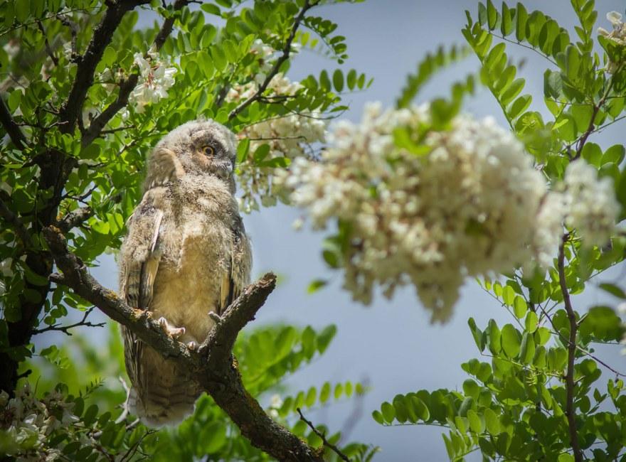 В Николаеве на территории Центрального стадиона поселились ушастые совы