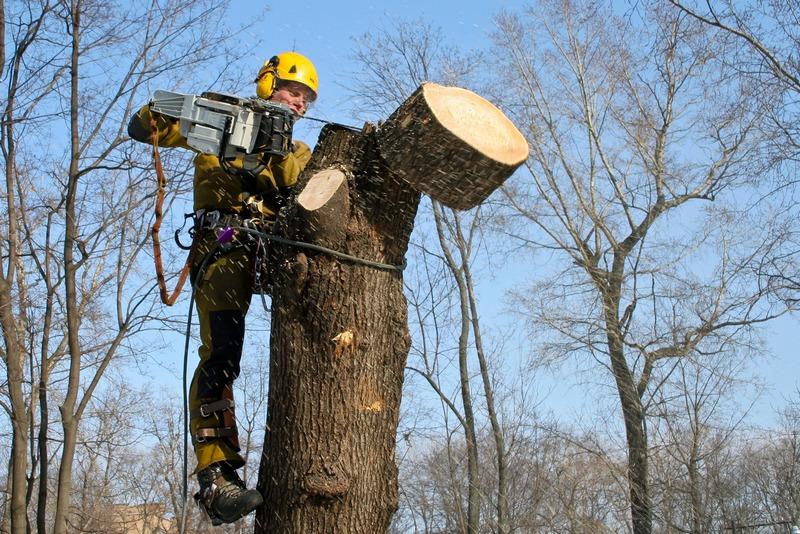 В Николаеве департамент ЖКХ отдал ₴6 млн. за обрезку деревьев фирме партнера экс-нардепа Козыр
