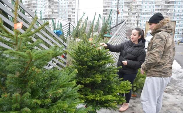 Сколько будет стоить новогодняя елка в Николаеве: названа минимальная цена