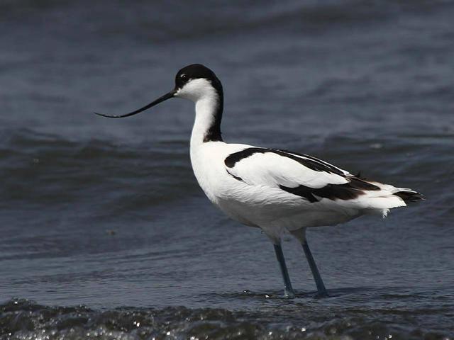 В Тилигульском ландшафтном парке появятся островки для гнездования редких птиц