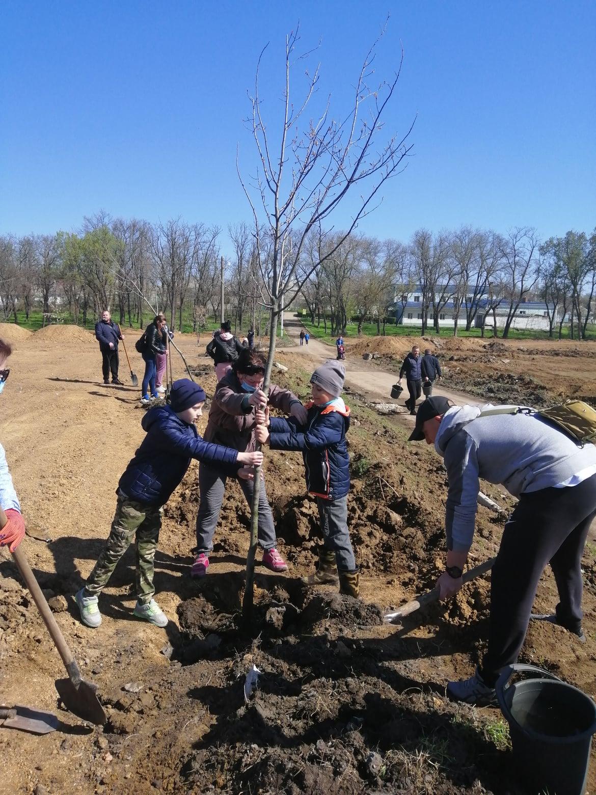 Дети с родителями в парке «Богоявленский» высадили аллею ясеней