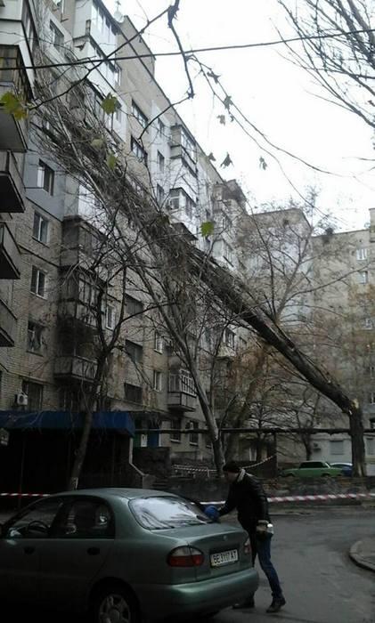 В Николаеве продолжают падать сухие деревья. Кто примет меры?