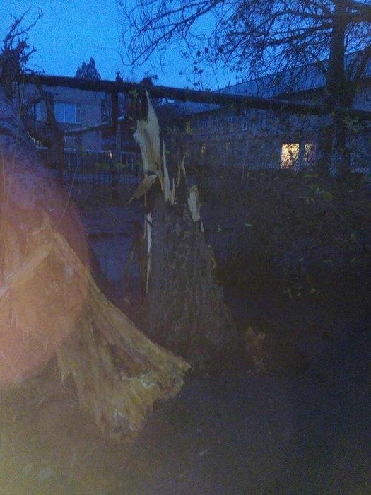 1-го декабря на территорию Детского сада №93 упало дерево. Пострадавших нет
