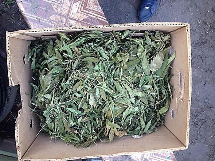Житель Витовского района хранил каннабис на сумму около 30 тысяч гривен