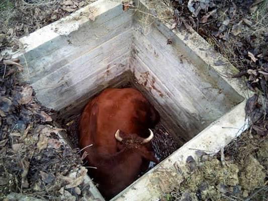 На Николаевщине спасатели достали корову из колодца