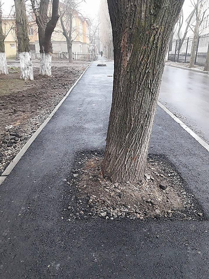 В Николаеве пешеходную дорожку заасфальтировали прямо через деревья и пеньки