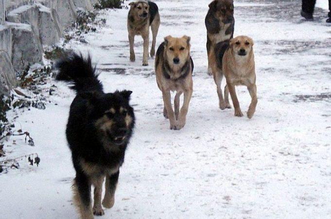 В Одесской области бездомные собаки напали на девочку