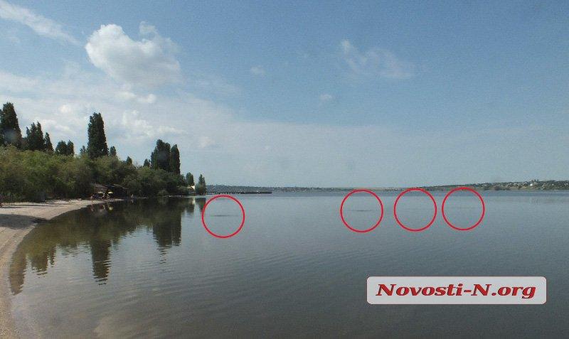 Уровень загрязнения реки в районе Намыва превышен почти в 5000 раз - течет канализация (ВИДЕО)