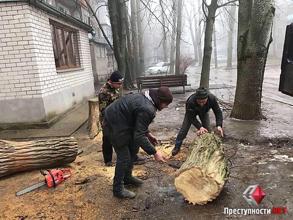 В Николаеве во дворе жилого дома «лесорубы» без документов спилили живую акацию