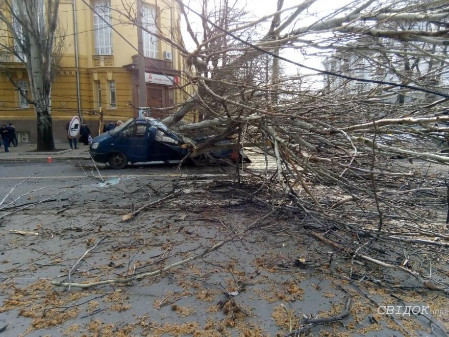В центре Николаева огромное дерево рухнуло на двигавшееся авто