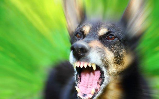 В Николаеве у собаки, покусавшей людей, обнаружили бешенство
