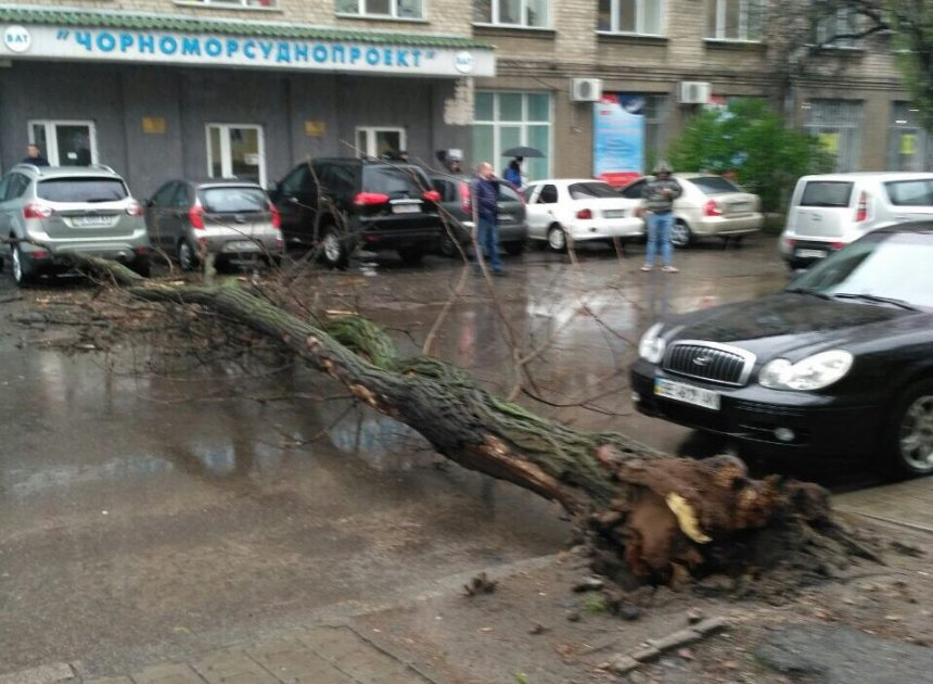 В Николаеве на ул. Бузника на дорогу рухнуло дерево, полностью перекрыв проезд