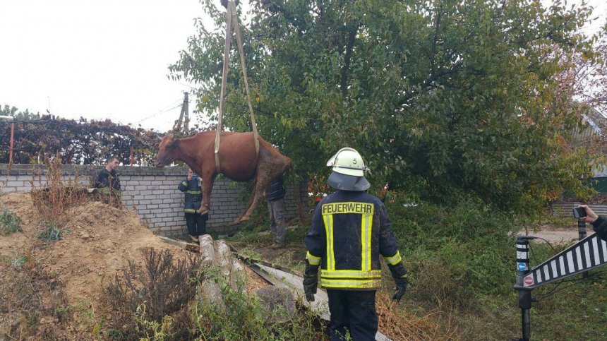 В Корабельном районе при помощи подъемного крана из ямы доставали корову