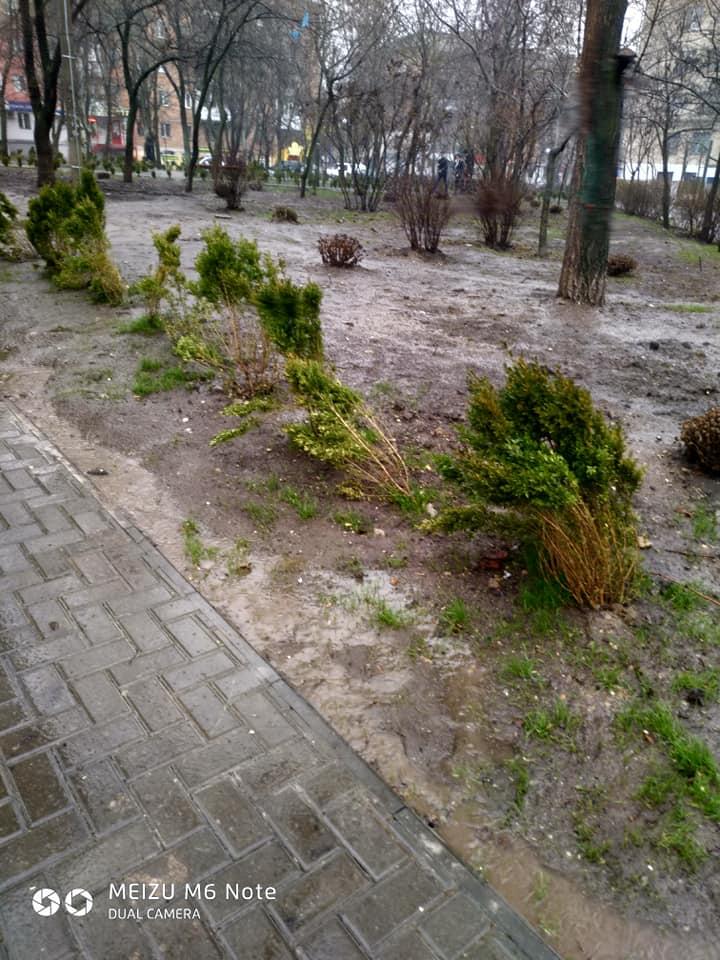 В Николаеве в отремонтированном почти за 3 миллиона гривен сквере погибает самшит