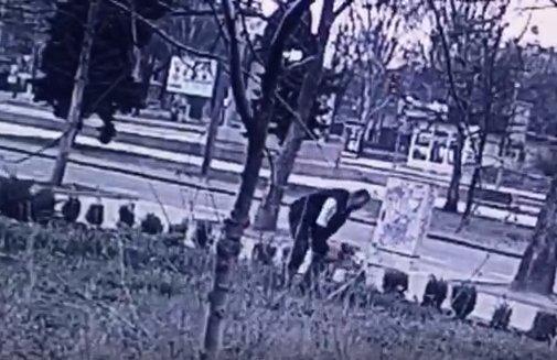 В Николаеве сняли на камеру, как с клумбы воруют хризантемы