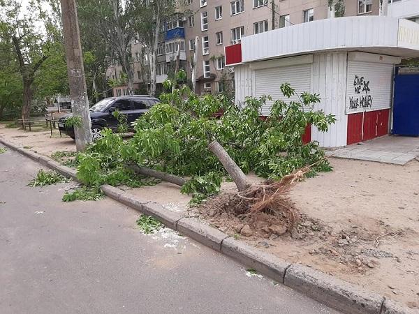 В Корабельном районе из-за ветра три дерева упали на детскую площадку