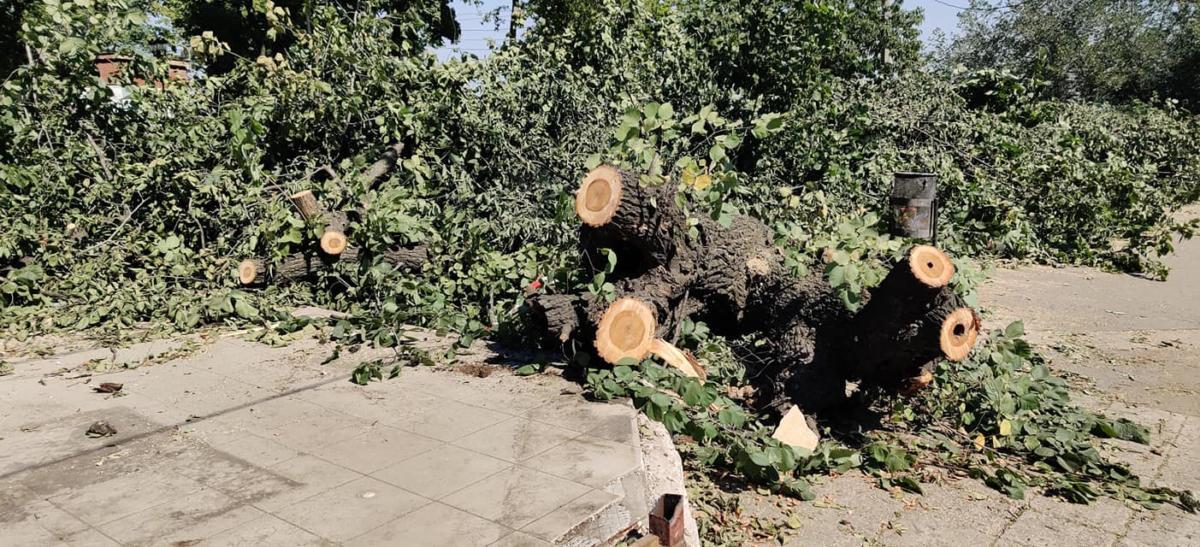 В Николаеве на остановке «Адмиральская» спилили деревья