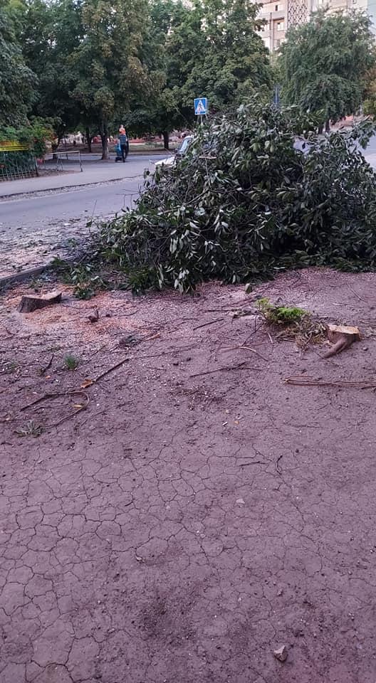 Николаевцы возмущены тем, что на улице Садовой пилят здоровые деревья