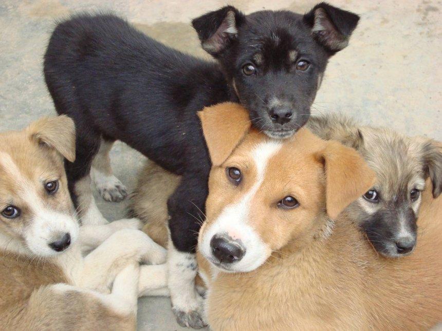В КП «Центр защиты животных» в Николаеве списали сухого корма на 300 тысяч
