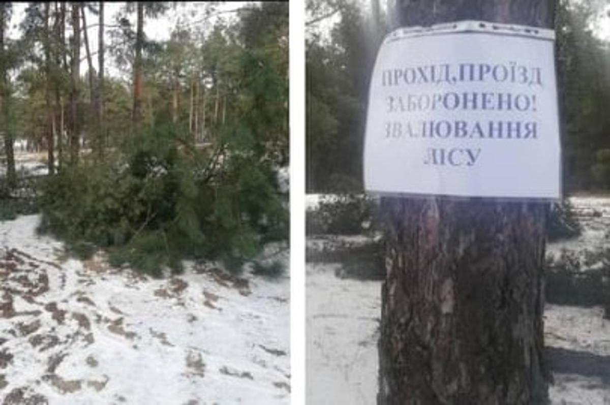 Жители Николаева бьют тревогу: Матвеевский лес хаотично уничтожают