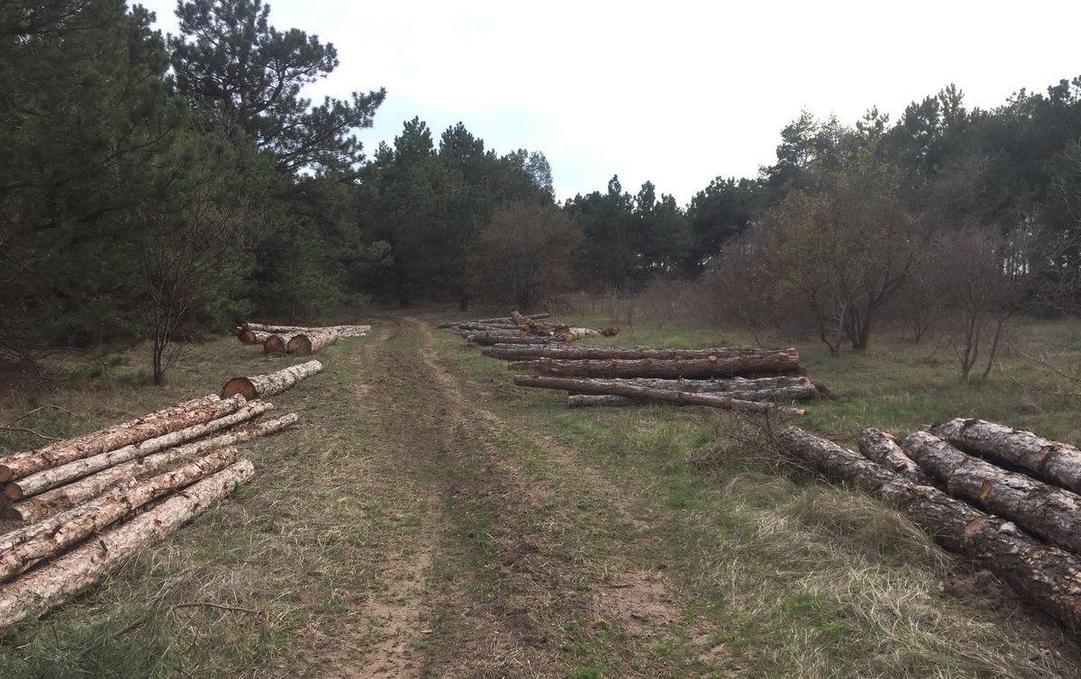 Возле НГЗ рубят лес — к терминалу Фалько построят новую ж/д ветку