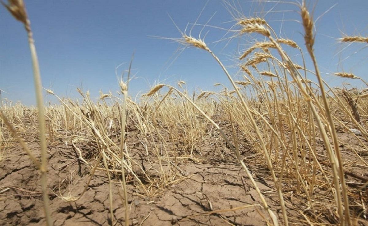 В ближайшие 30 — 40 лет Украине грозит опустынивание больших территорий, — Кабмин