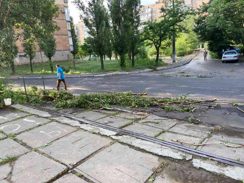 В Корабельном районе непогода повалила деревья и оборвала провода